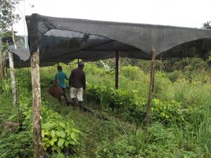 Agroforestry & Environment in Ecuador