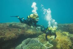 Coral Reef Surveying