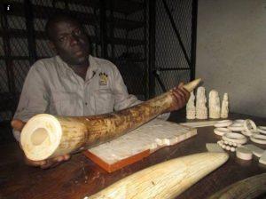 Wildlife Justice Malawi