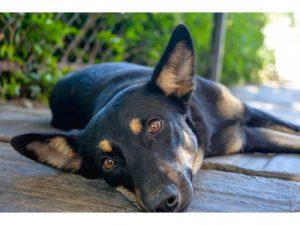 nepal canine rehab