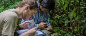 Conservation-Internship-Peru-Cover