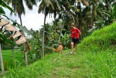 Bali: Canine Care Volunteer Project