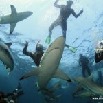 Underwater photography internship in south africa