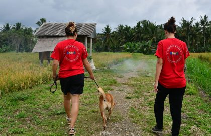 Bali-canine-rehabilitation-volunteer-cover