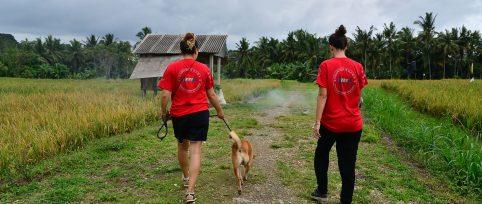 Bali-canine-rehabilitation-volunteer-cover