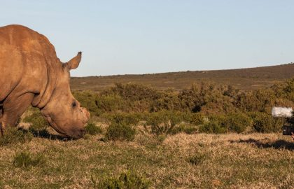 wildlife-and-travel-photography-internship-in-south-africa
