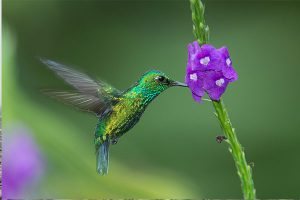 Environmental Multimedia Internship Peru