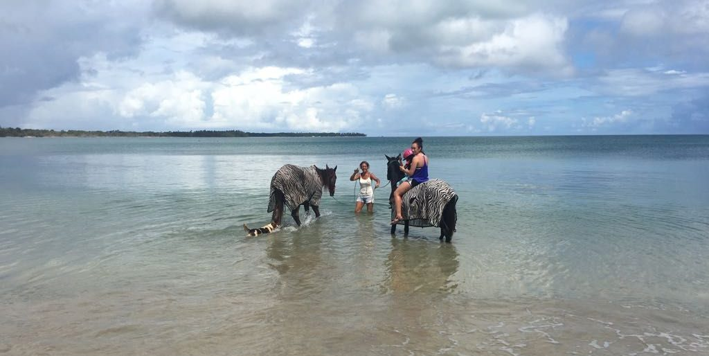 Report on the Equine project in Trinidad