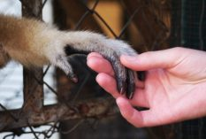Thailand-Gibbon-Volunteer-project