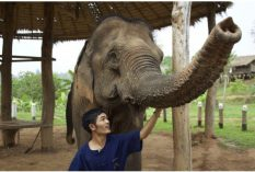 Elephant Rehabilitation in Laos