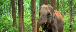 Elephant Rehabilitation in Laos