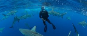 Shark Research, Education & Conservation Project