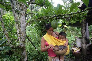 Traditional Medicine Internship Ecuador