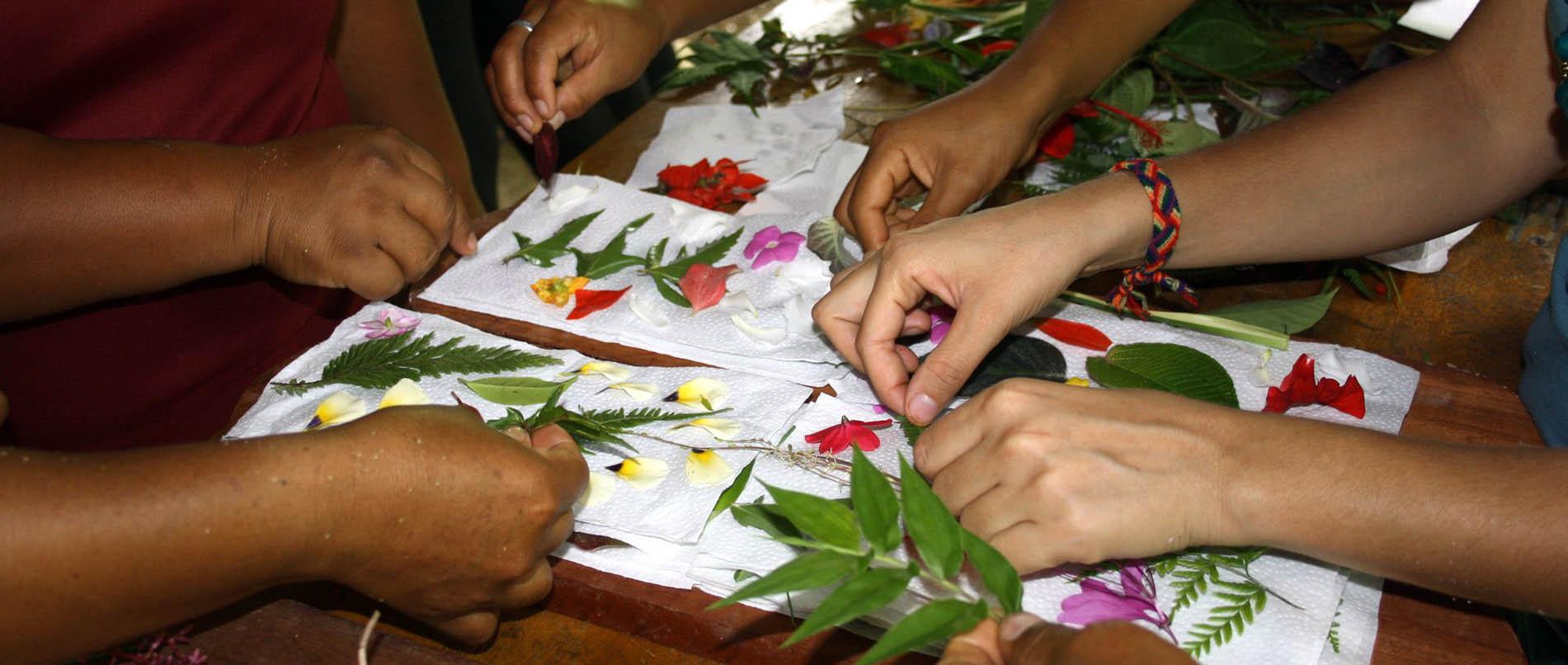 Amazonian Arts internship