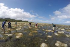 coral-bleaching-and-climate-change