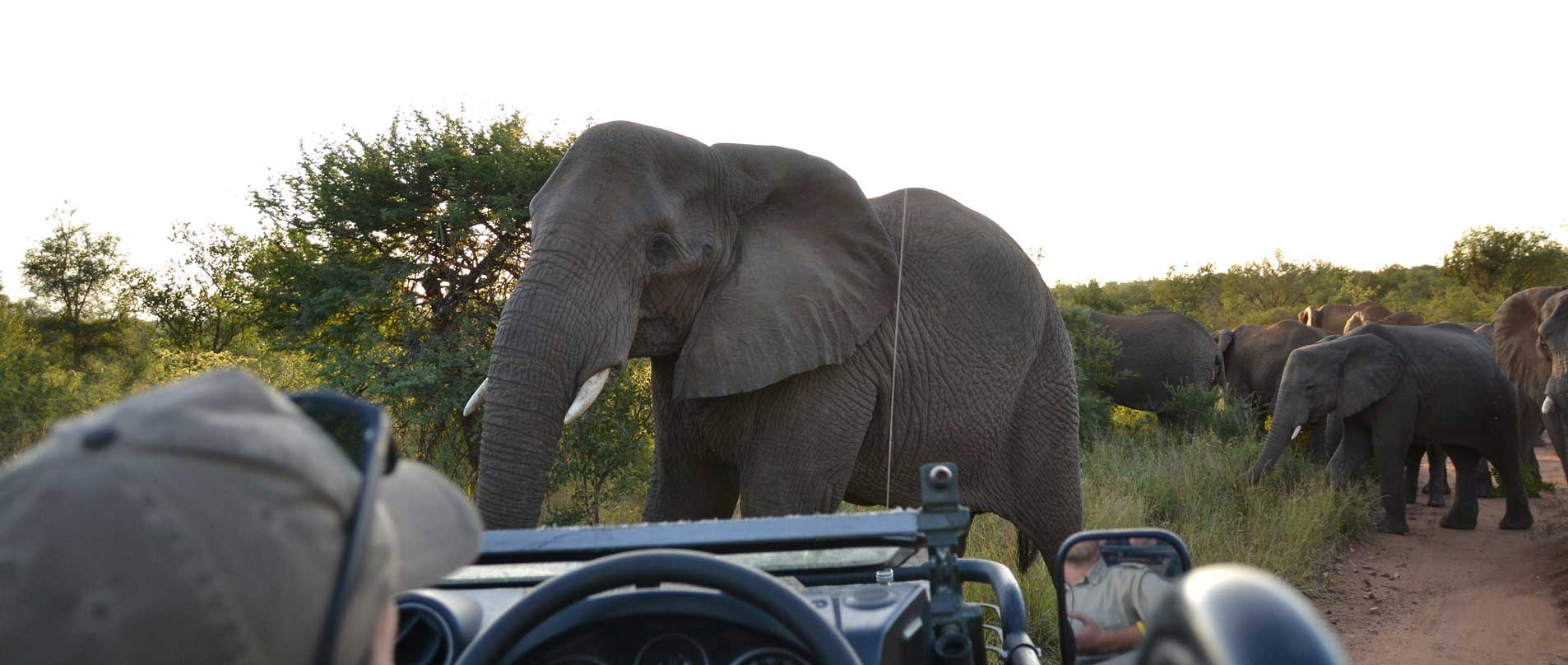Camera-Trapping-and-data-collection-in-South-Africa-cover