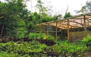 Galapagos-Islands--Sustainable-Agriculture-cover