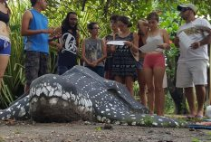 sea turtle conservatin costa rica