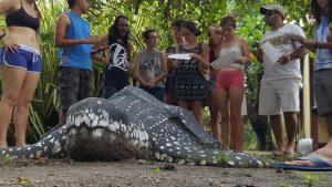 sea turtle conservatin costa rica
