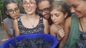sea turtle conservation costa rica