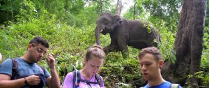 Thailand-Volunteer-with-Elephants-cover