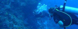 Marine-Conservation Mexico