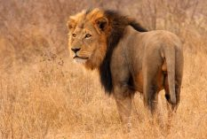 Field-Guide-Course-South-Africa