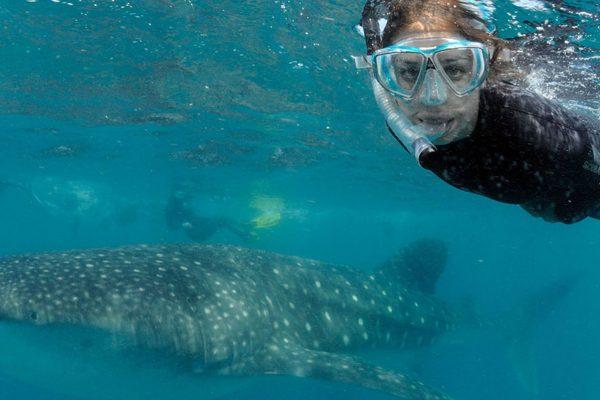 Mozambique-Whale-shark-internship